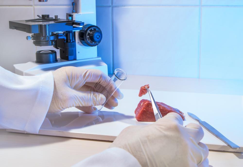 Lebensmittelprobe - Ein Lebensmittelkontrolleur ist im Begriff ein Stückchen Fleisch im Reagenzglas zu prüfen